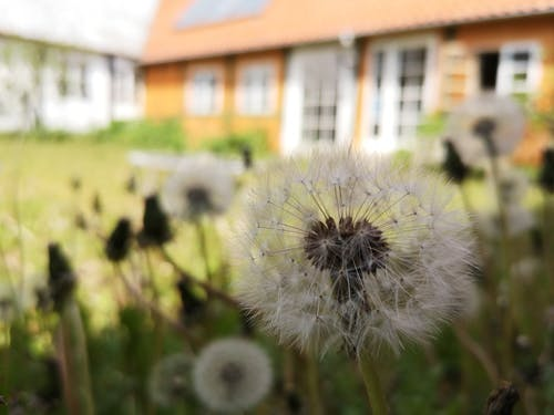 Free stock photo of dust, flowers, house