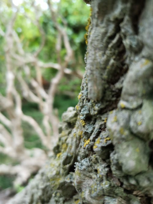 Free stock photo of bark, birch, details, forest