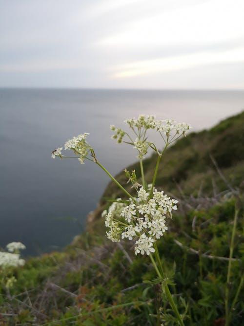 Free stock photo of flower, horizon, sky, water