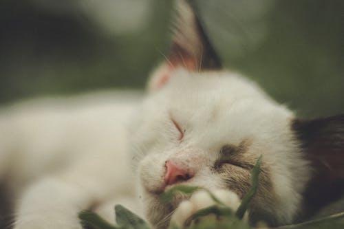 White Cat on Green Grass