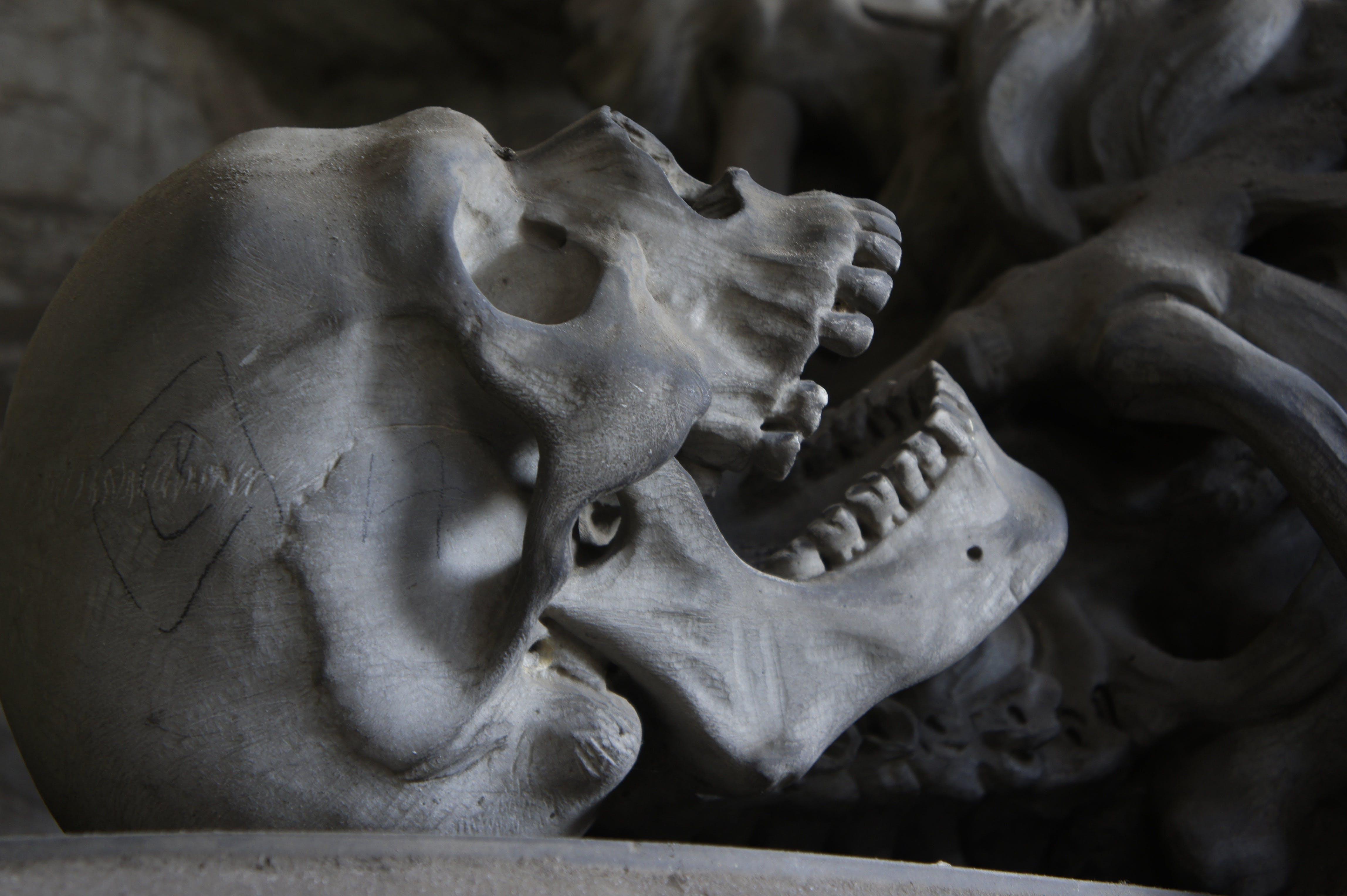 Free stock photo of weird, teeth, death, scary