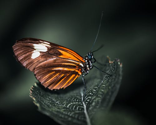 Brown and orange butterfly in woods