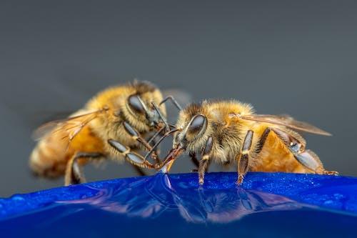 Bees sitting on blue flower in garden