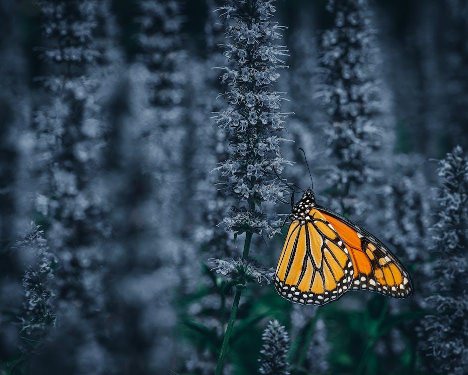 Orange butterfly on flower in garden