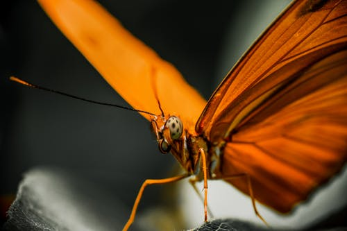 Macro view of bright Julia butterfly sitting on leaf of plant in nature