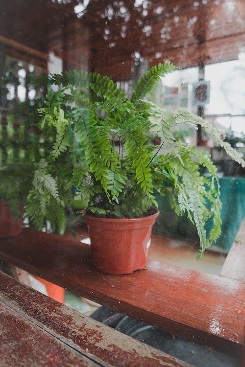 açık hava, ağaç, ahşap, Bahçe içeren Ücretsiz stok fotoğraf