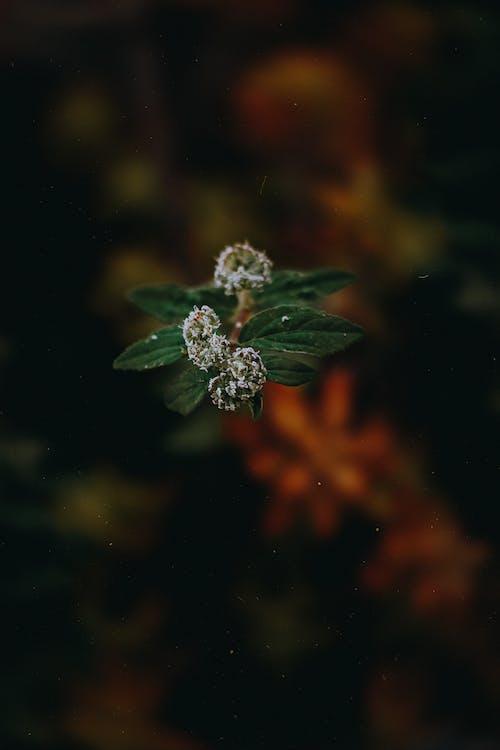 Foto d'estoc gratuïta de flors, fulles, macro, planta