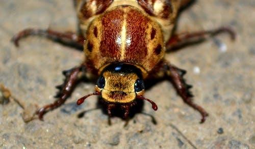 Foto stok gratis beetle, binatang, makro, merapatkan