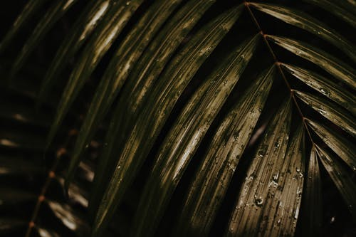 Fotos de stock gratuitas de árbol, gotas de lluvia, hojas, húmedo