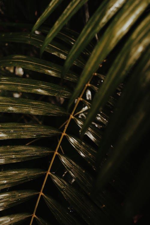 Darmowe zdjęcie z galerii z drzewo, liść palmy, liść paproci