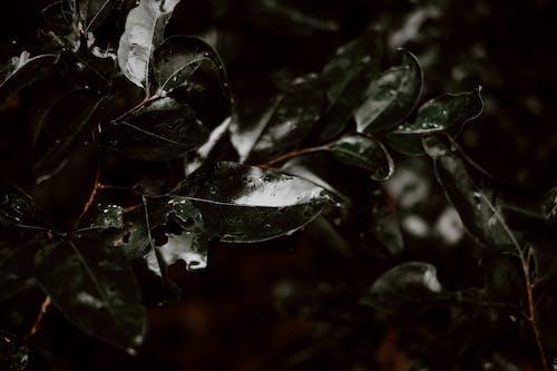 Gratis arkivbilde med anlegg, blader, dugg, hage