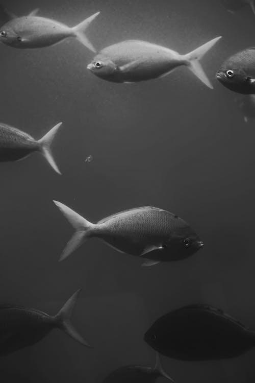 Foto d'estoc gratuïta de animal, animals aquàtics, aquàtic, blanc i negre