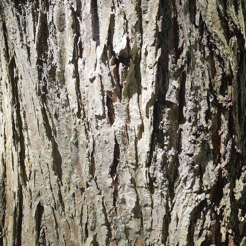 Kostnadsfri bild av bark, grov, hundskall, kontrast