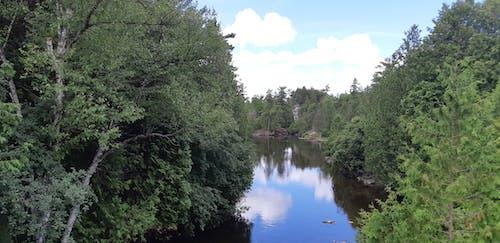Kostnadsfri bild av blå himmel, flod, grön, guelph