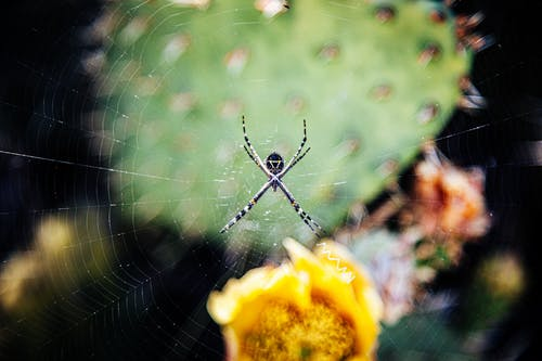 Shallow Focus Photo of a Spider in a Cobweb