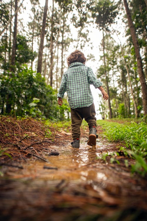 Back view full body cute little boy in casual outfit strolling dirt lane covered with puddles in green abundant woods