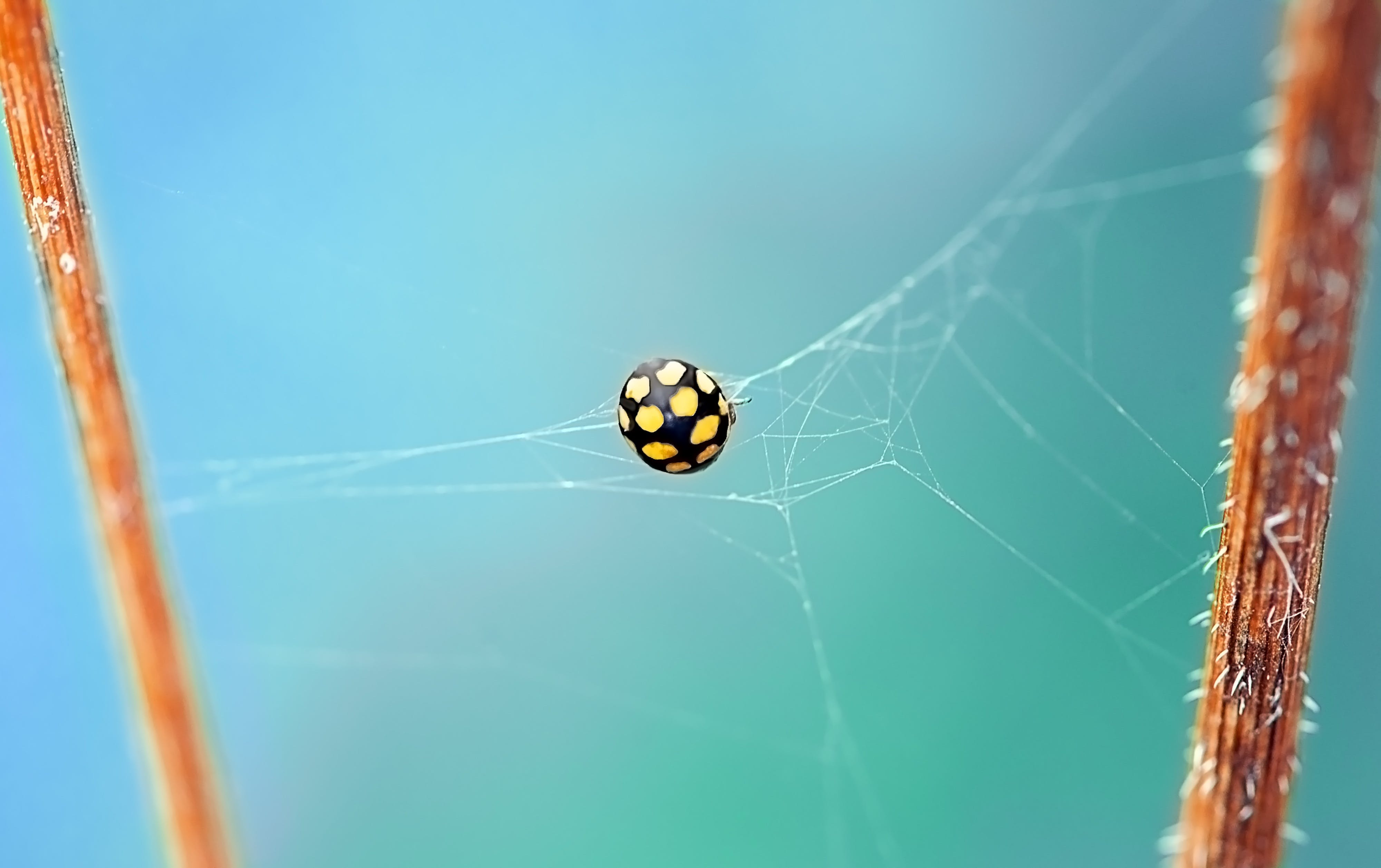 Shallow Focus Photography of Black and Yellow Spider on Web