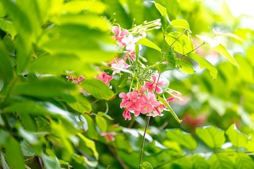Kostnadsfri bild av blad, blomma, blomning, buske