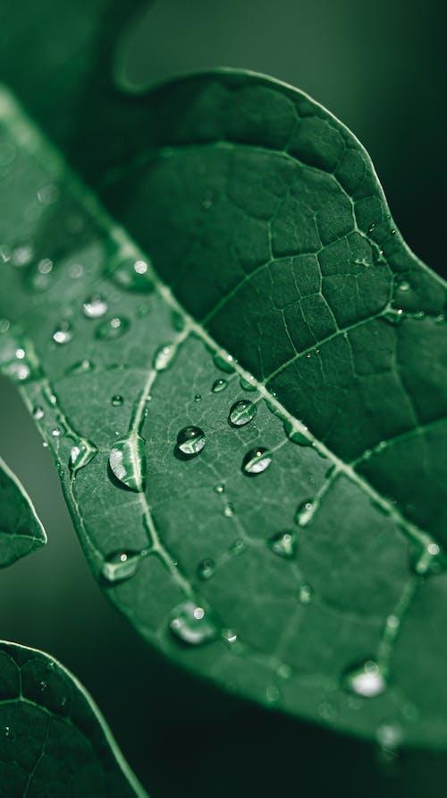 Kostenloses Stock Foto zu blatt, flora, grün