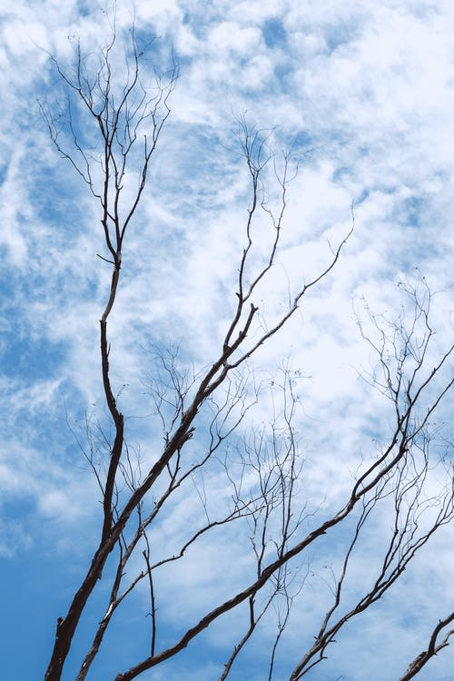 Leafless Tree Under Blue Sky