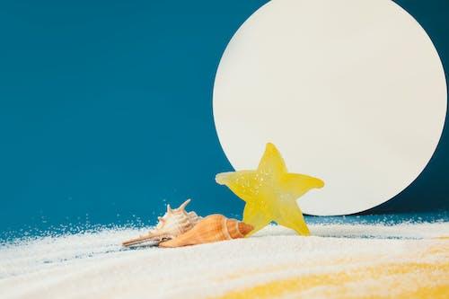 Free stock photo of beach, sea, starfish