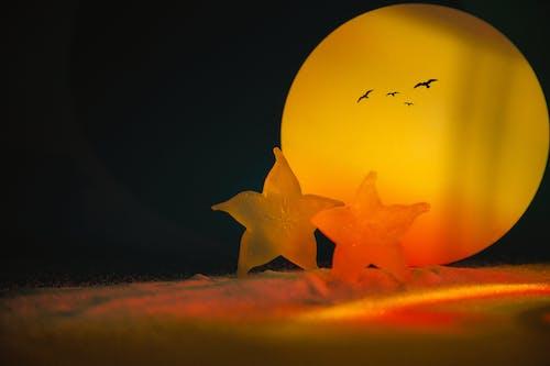 Free stock photo of at sea, beach, beach sunset, starfish