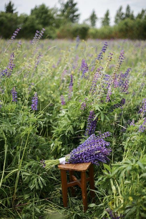 Purple Flowers on Brown Wooden Chair