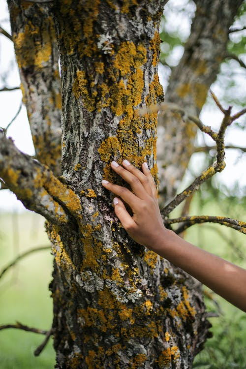 Person Touching Brown Tree Trunk
