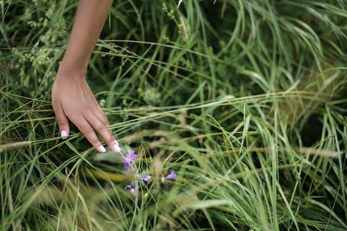 Fotobanka sbezplatnými fotkami na tému bylinky, campanula, dlaň