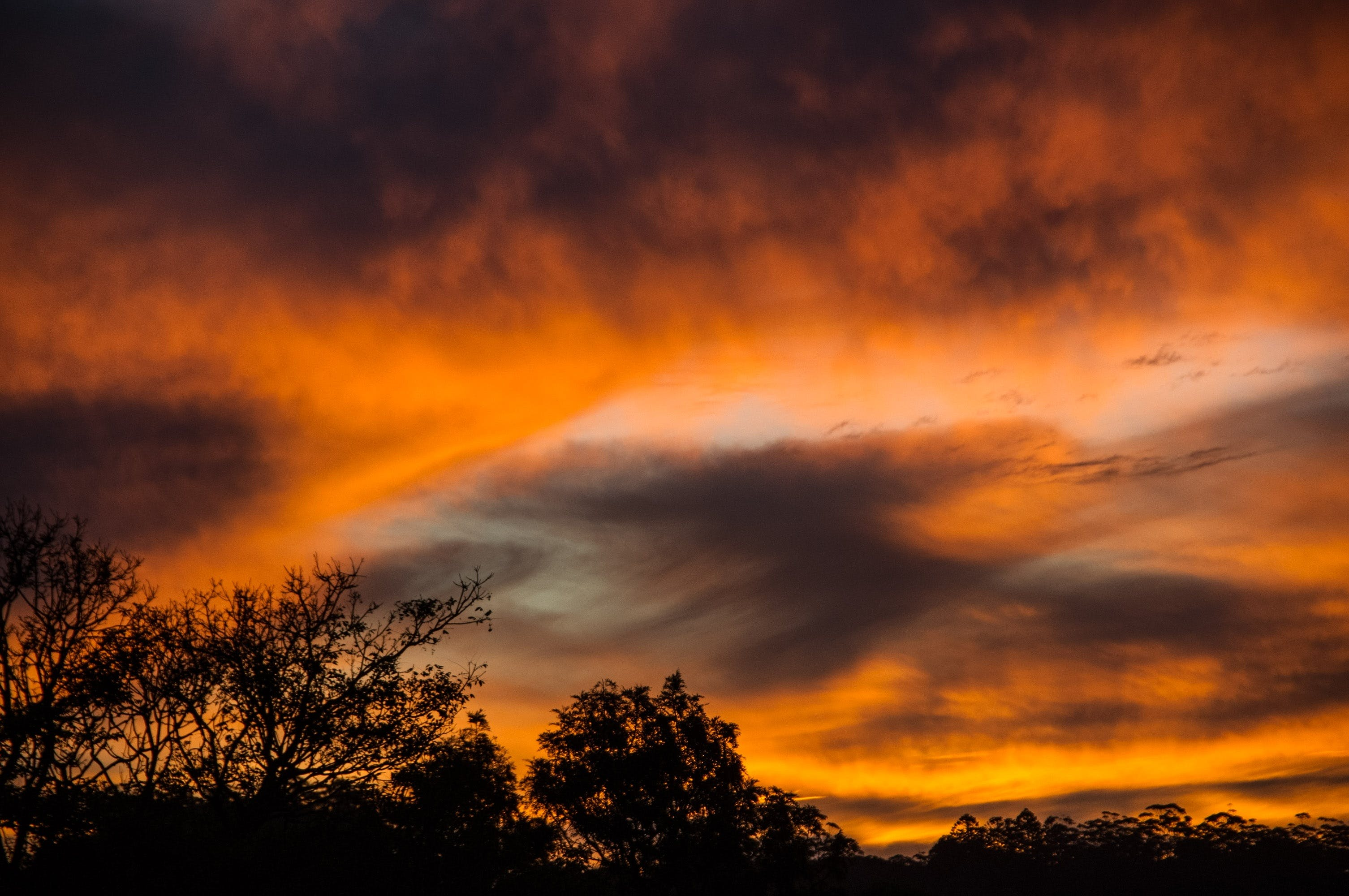 Kostenloses Stock Foto zu bäume, bewölkt, dämmerung, himmel