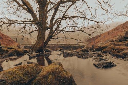 Δωρεάν στοκ φωτογραφιών με rock, αυγή, βουνό, βράχος