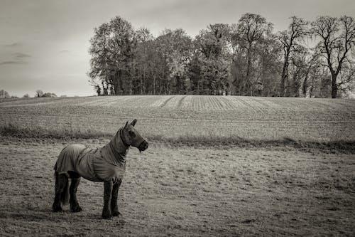 Δωρεάν στοκ φωτογραφιών με αγρόκτημα, Άνθρωποι, βοσκοτόπι, βοσκότοπος
