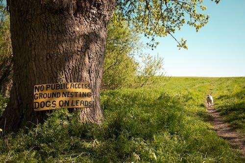 Δωρεάν στοκ φωτογραφιών με ανάπτυξη, αυγή, γρασίδι, δέντρο