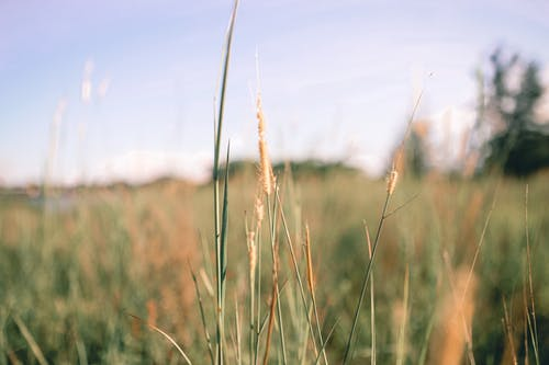 Thin cereal grass in countryside in sunny day