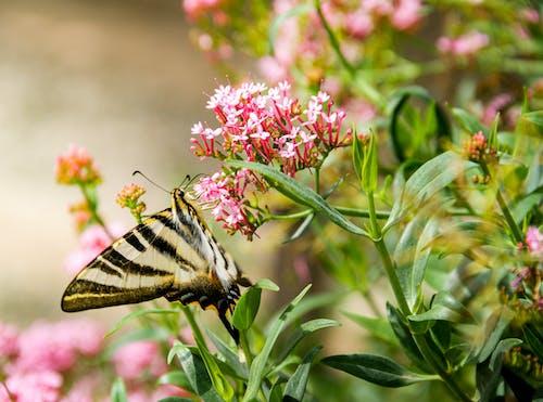 Foto profissional grátis de ao ar livre, atraente, bonito, borboleta
