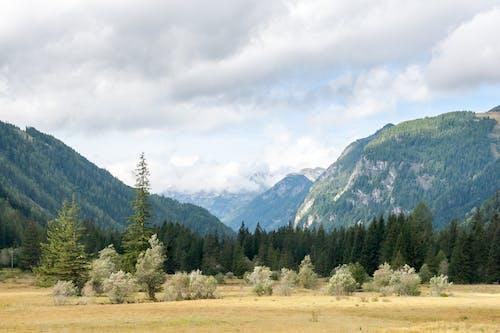 Immagine gratuita di albero, altopiano, ambiente