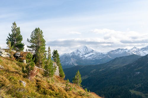 Coniferous trees growing on grassy slope against mountain ridge and cloudy sky in Obertauern, Austria