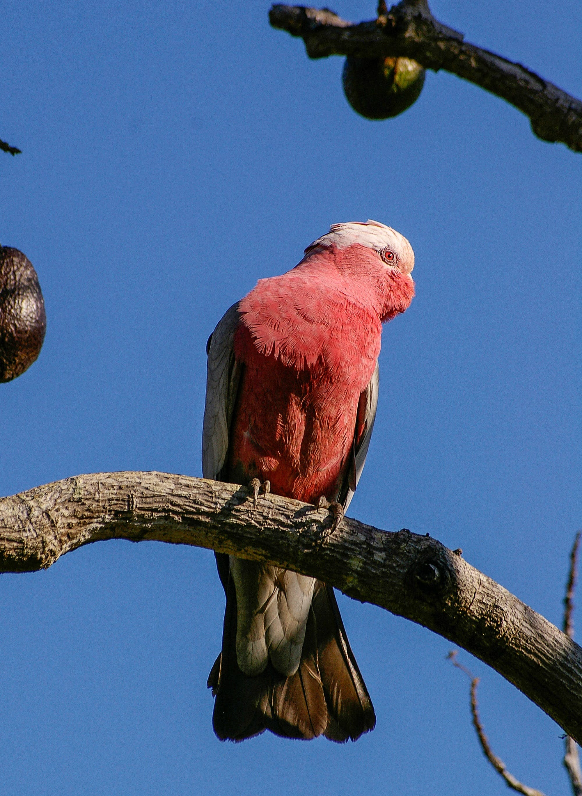 Red and White Bird on Brown Tree Trunk