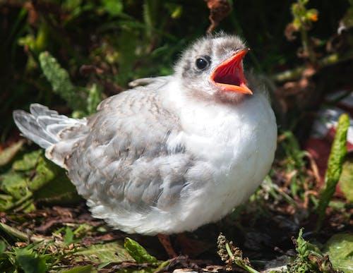 Free stock photo of baby, bird, tern