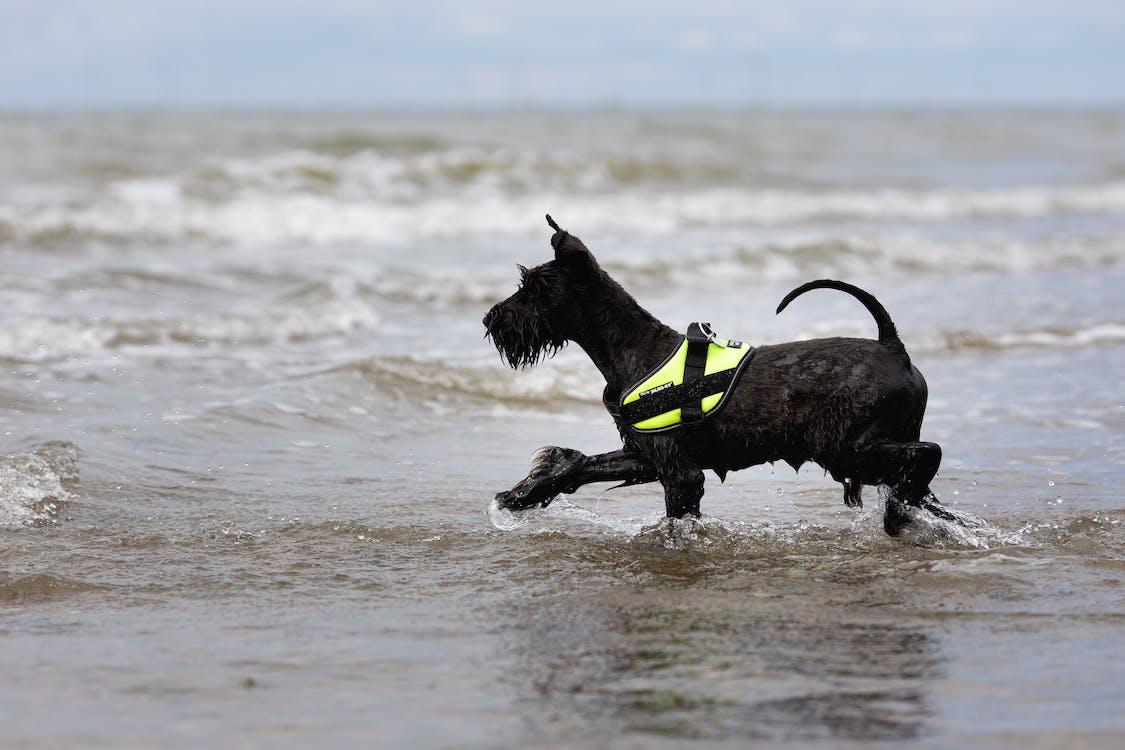 Black Short Coat Medium Dog Running on Water