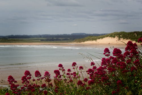 Free stock photo of beach, flowers