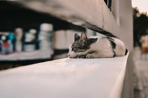 Selective Focus Photo of a Black and White Cat Lying on a Railing