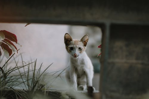 Selective Focus Photo of a White and Orange Kitten