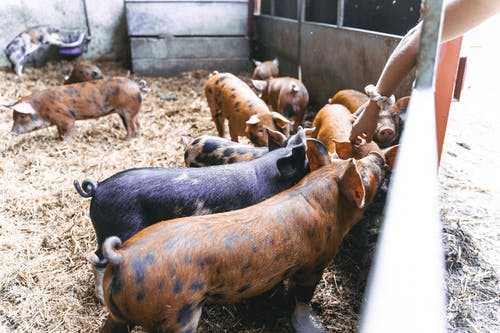 Immagine gratuita di agricoltura, ambiente, animale, azienda agricola