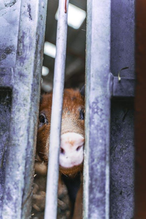 Immagine gratuita di abbandonato, alla ricerca, animale, azienda agricola