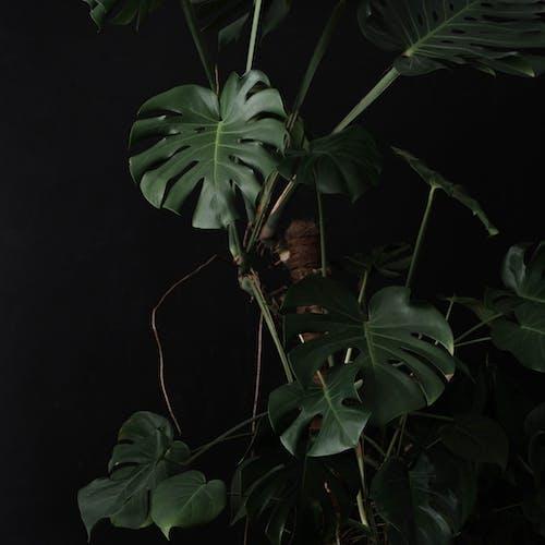 Man in Black Shirt Standing Beside Green Plant