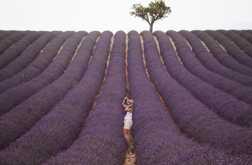 Side view of anonymous female admiring purple blooming lavender fields in Provence of France