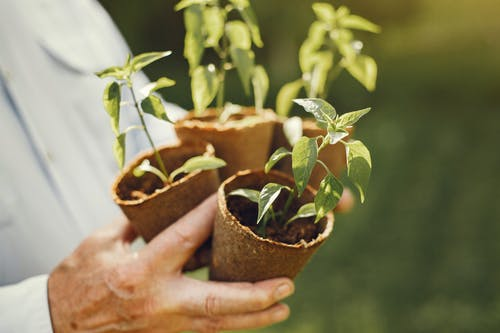 Close-Up View of a Person Holding Potted Plants