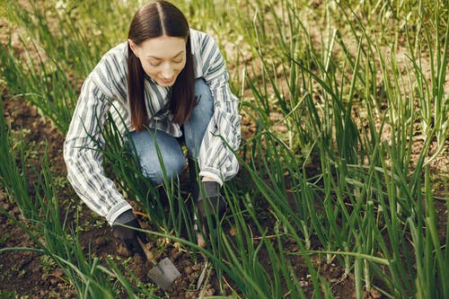 Darmowe zdjęcie z galerii z gleba, gospodarstwo, kobieta