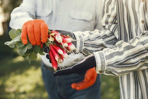 People Holding Freshly Picked Radish